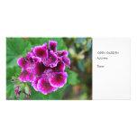 Geranio púrpura tarjetas fotográficas personalizadas