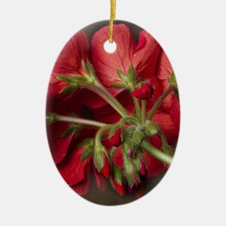 Geranio rojo en curso ornamentos para reyes magos