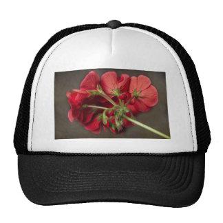 Geranio rojo en curso gorras