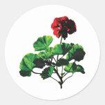 Geranio rojo retroiluminado etiquetas redondas