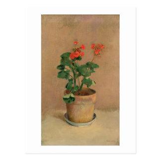 Geranios en un pote, c.1905 (aceite en lona) postal