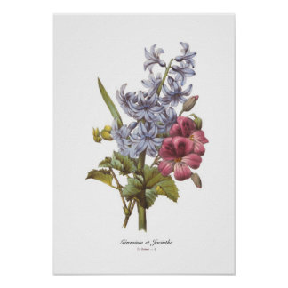 Geranium and Hyacinth Posters