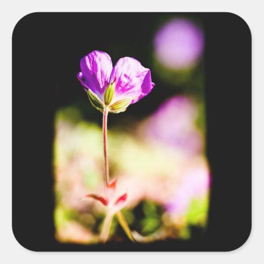 geranium and sun on black square sticker