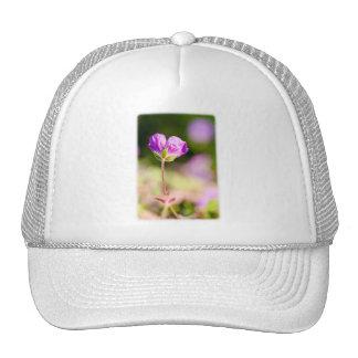 geranium and sun trucker hat