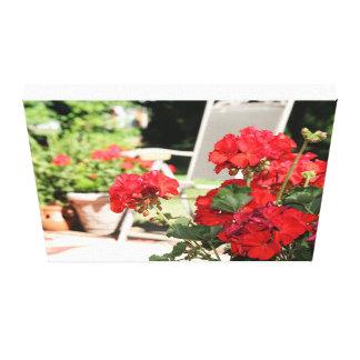 Geranium Blooms Canvas Print