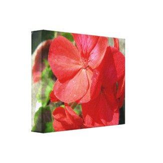 Geranium wrappedcanvas