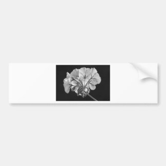 Geranium Flower In Progress Black and White Bumper Sticker