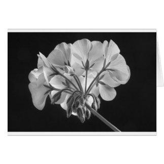 Geranium Flower In Progress Black and White Card