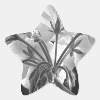 Geranium Flower In Progress Black and White Star Sticker