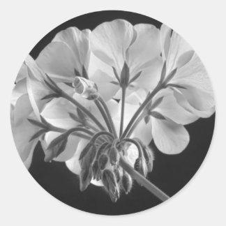 Geranium Flower In Progress Black and White Classic Round Sticker