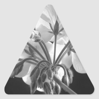 Geranium Flower In Progress Black and White Triangle Sticker