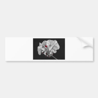Geranium Flower In Progress Bumper Sticker