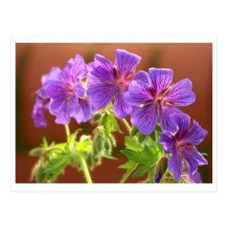 Geranium Flower Postcard