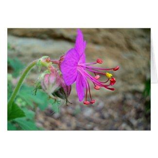 Geranium Flower Profile 2016 Card
