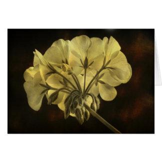 Geranium Flower Texture Card