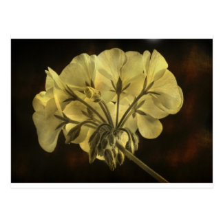 Geranium Flower Texture Postcard