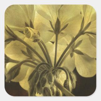 Geranium Flower Texture Square Sticker