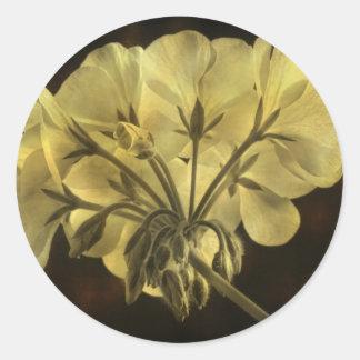 Geranium Flower Texture Classic Round Sticker