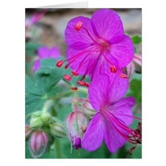 Geranium Flowers 2016 Card