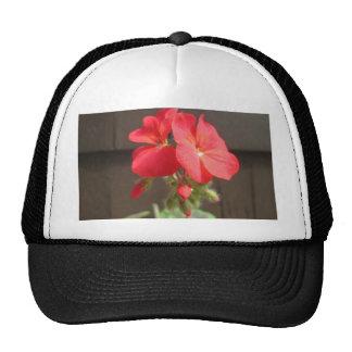 Geranium Red Trucker Hat