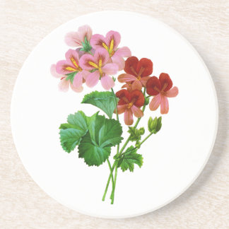 Geranium Variete by Pierre Joseph Redoute Drink Coaster