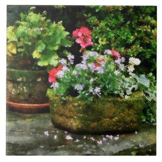 Geraniums and Lavender Flowers on Stone Steps Ceramic Tile
