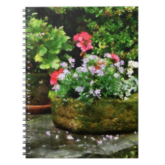 Geraniums and Lavender Flowers on Stone Steps Notebooks