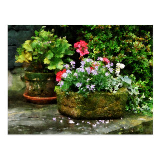 Geraniums and Lavender Flowers on Stone Steps Postcard