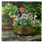 Geraniums and Lavender Flowers on Stone Steps Tile