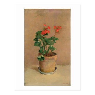 Geraniums in a Pot, c.1905 (oil on canvas) Postcard
