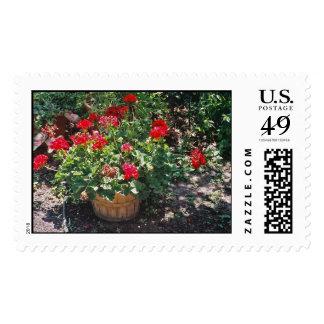 Geraniums in bucket postage