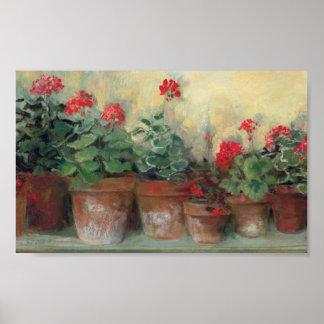 Geraniums in Pots Poster