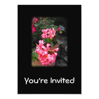 Geraniums. Pelargonium flowers. Card