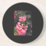 Geraniums. Pelargonium flowers. Coasters