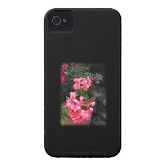 Geraniums. Pelargonium flowers. iPhone 4 Case