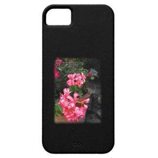 Geraniums. Pelargonium flowers. iPhone SE/5/5s Case