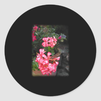 Geraniums. Pelargonium flowers. Round Sticker