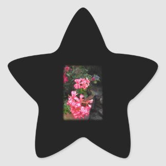 Geraniums. Pelargonium flowers. Stickers