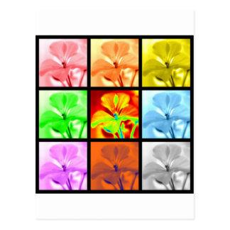 Geraniums Squared Postcard