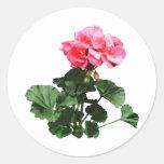 Geraniums Standing Tall Classic Round Sticker