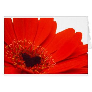 Gerber Daisey Greeting Card