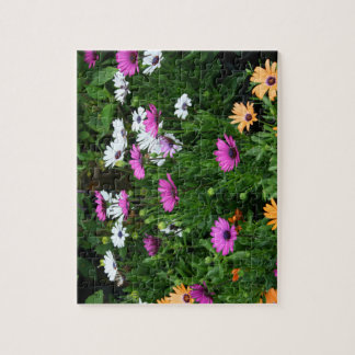 gerber daisies field multi colored flower jigsaw puzzle