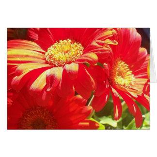 Gerber Daisy 1 Card
