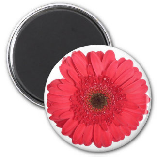 Gerber Daisy 2 Inch Round Magnet