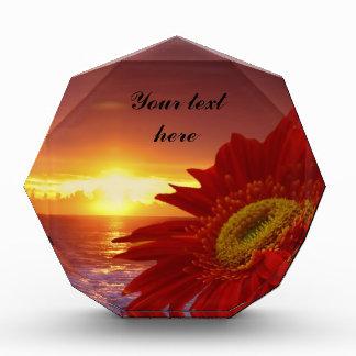 Gerber Daisy and sunset Award