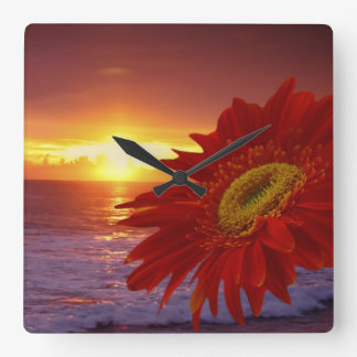 Gerber Daisy and sunset Square Wall Clock