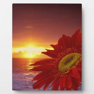 Gerber Daisy and sunset Photo Plaque