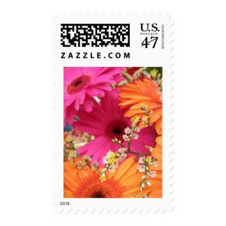 Gerber Daisy Postage Stamp