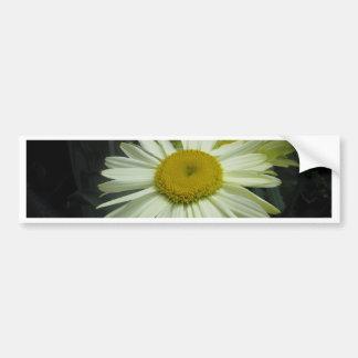 Gerber Daisy Shining Bright Bumper Stickers
