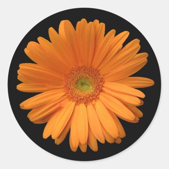 Gerber Daisy sticker